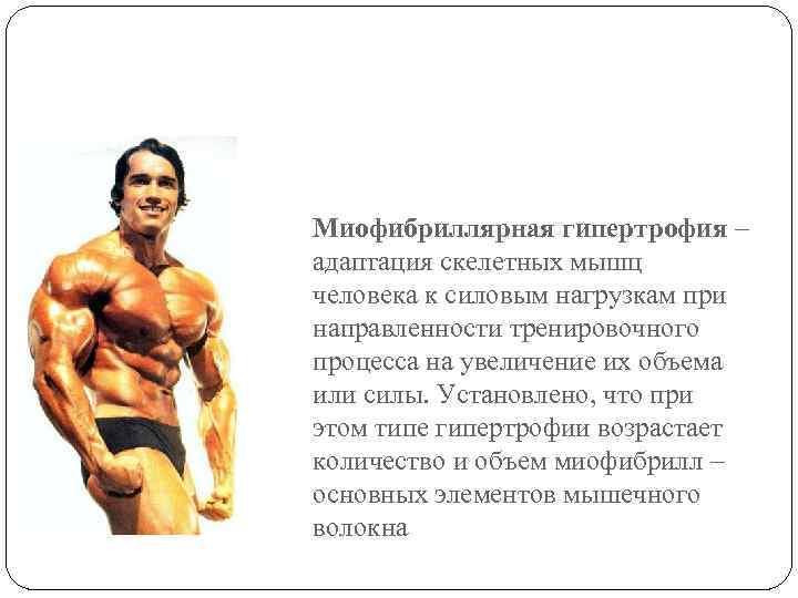Гипертрофия мышц схемы