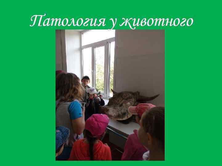 Патология у животного