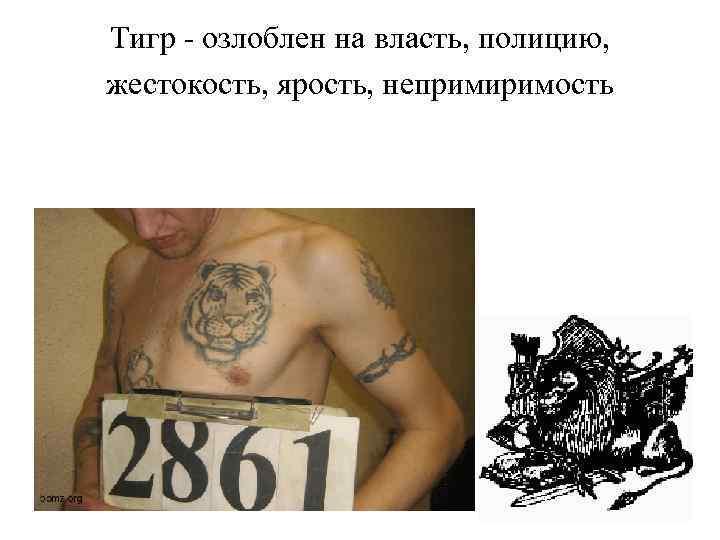 Тигр - озлоблен на власть, полицию, жестокость, ярость, непримиримость