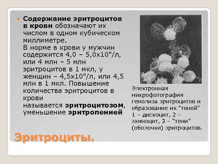Как повысить эритроциты в крови в домашних условиях 620