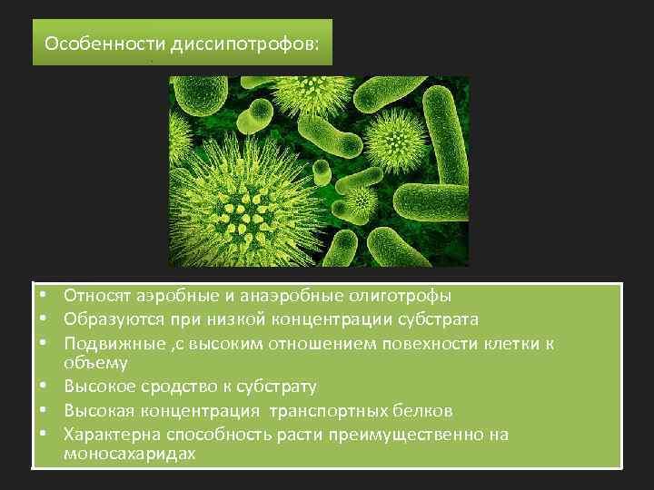 Особенности диссипотрофов: • Относят аэробные и анаэробные олиготрофы • Образуются при низкой концентрации субстрата