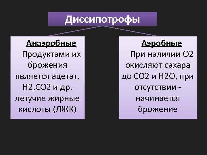 Диссипотрофы Анаэробные Продуктами их брожения является ацетат, H 2, CO 2 и др. летучие