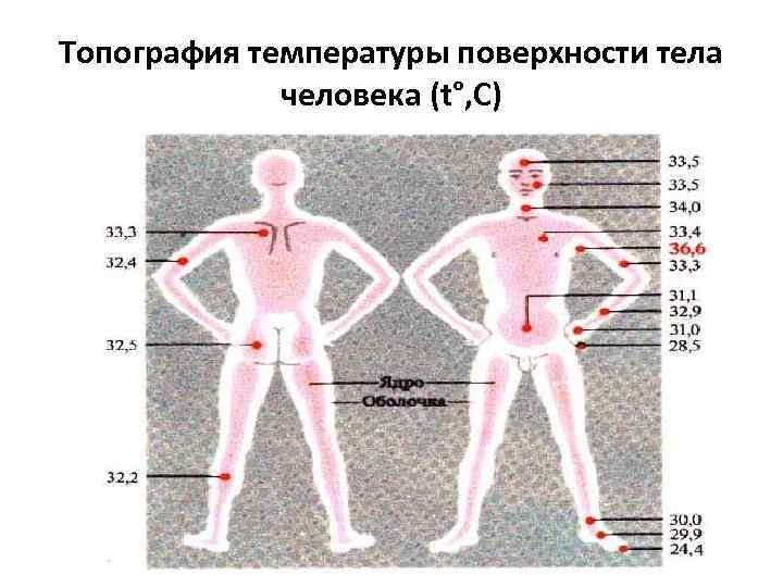 Топография температуры поверхности тела человека (t°, С)
