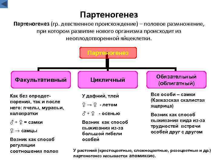 Партеногенез (гр. девственное происхождение) – половое размножение, при котором развитие нового организма происходит из