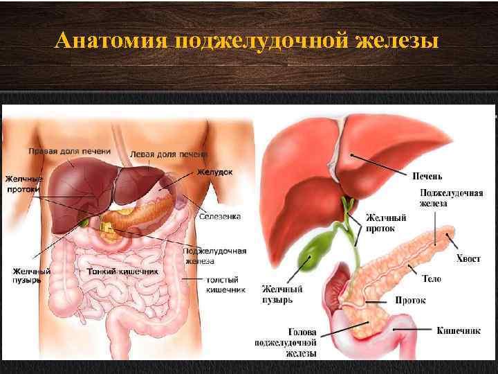 Схема поджелудочного печени желчного пузыря