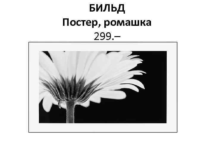 БИЛЬД Постер, ромашка 299. –