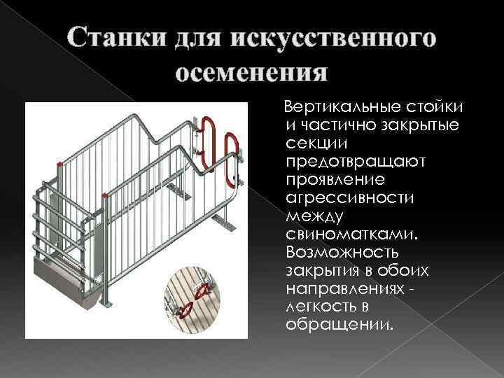 Станки для искусственного осеменения Вертикальные стойки и частично закрытые секции предотвращают проявление агрессивности между