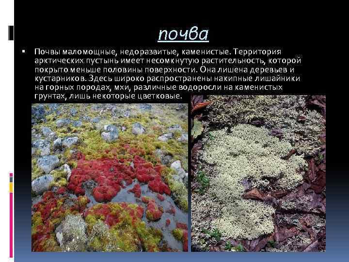 почва Почвы маломощные, недоразвитые, каменистые. Территория арктических пустынь имеет несомкнутую растительность, которой покрыто меньше