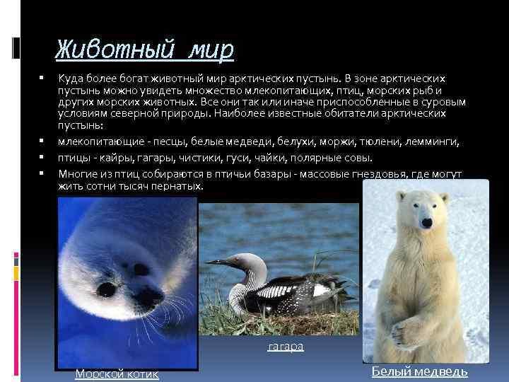 Животный мир Куда более богат животный мир арктических пустынь. В зоне арктических пустынь можно