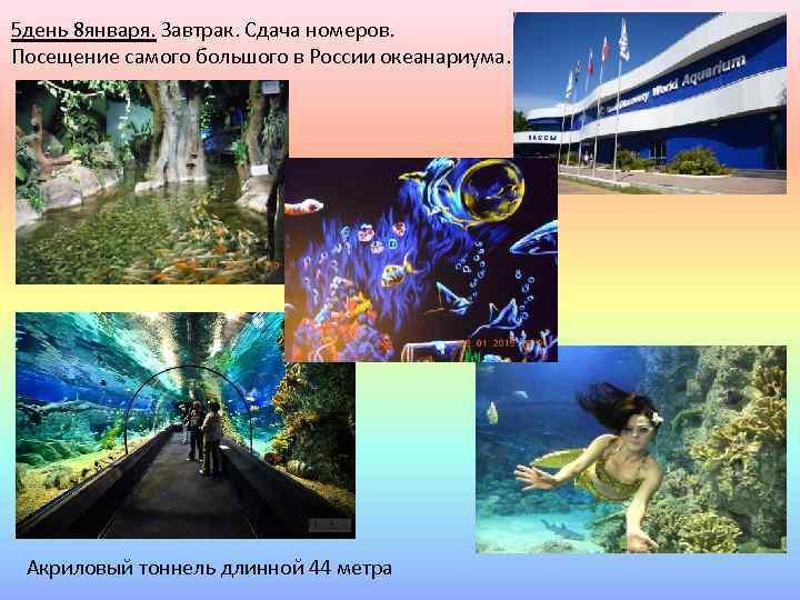 5 день 8 января. Завтрак. Сдача номеров. Посещение самого большого в России океанариума. Акриловый
