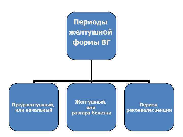 Периоды желтушной формы ВГ Преджелтушный, или начальный Желтушный, или разгара болезни Период реконвалесценции