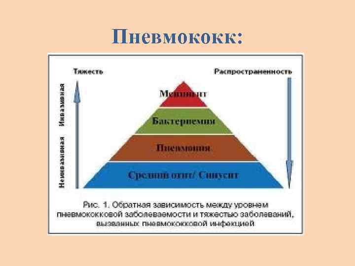 Пневмококк: