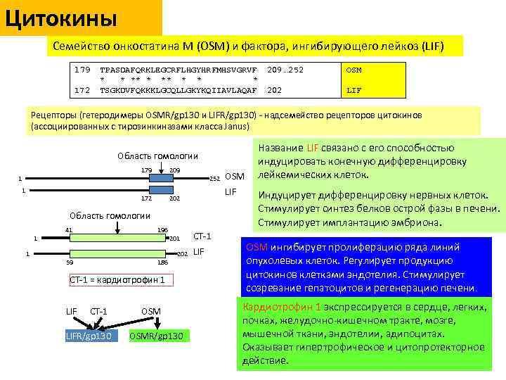 Цитокины Семейство онкостатина М (OSM) и фактора, ингибирующего лейкоз (LIF) 179 172 TPASDAFQRKLEGCRFLHGYHRFMHSVGRVF *