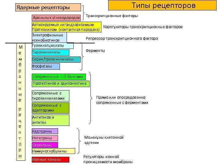 Типы рецепторов Ядерные рецепторы Арильных углеводородов М е м б р а н н