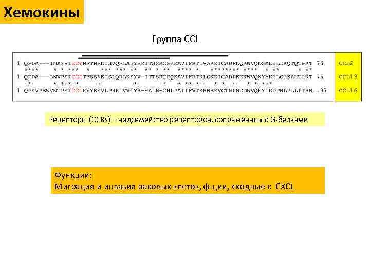 Хемокины Группа CCL Рецепторы (CCRs) – надсемейство рецепторов, сопряженных с G-белками Функции: Миграция и