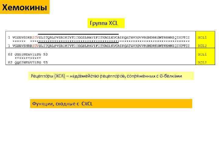 Хемокины Группа XCL Рецепторы (XCR) – надсемейство рецепторов, сопряженных с G-белками Функции, сходные с