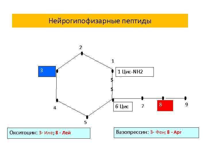 Нейрогипофизарные пептиды 2 1 3 1 Цис-NH 2 S S 6 Цис 4 7