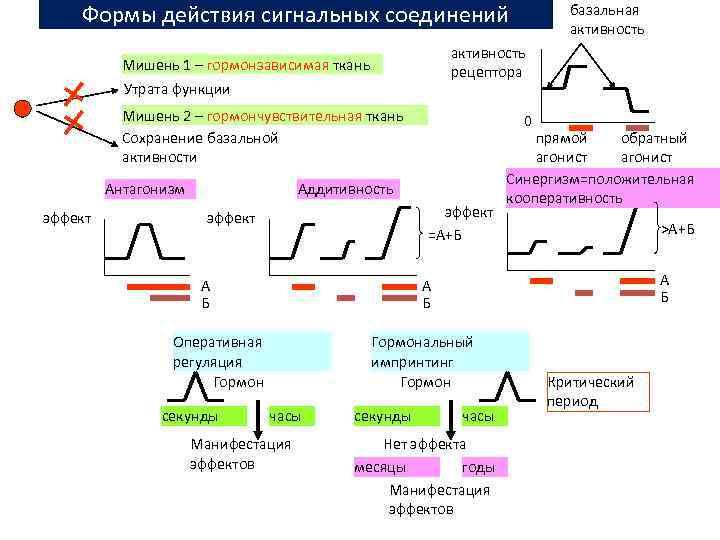 Формы действия сигнальных соединений активность рецептора Мишень 1 – гормонзависимая ткань Утрата функции Мишень