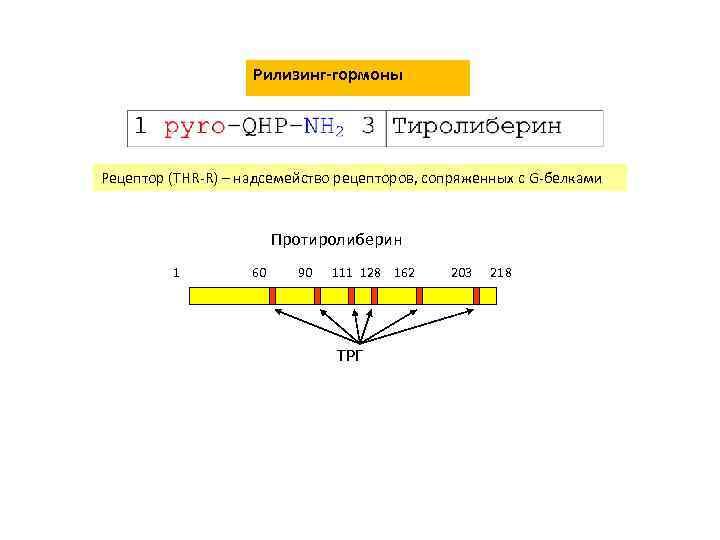 Рилизинг-гормоны Рецептор (THR-R) – надсемейство рецепторов, сопряженных с G-белками Протиролиберин 1 60 90 111