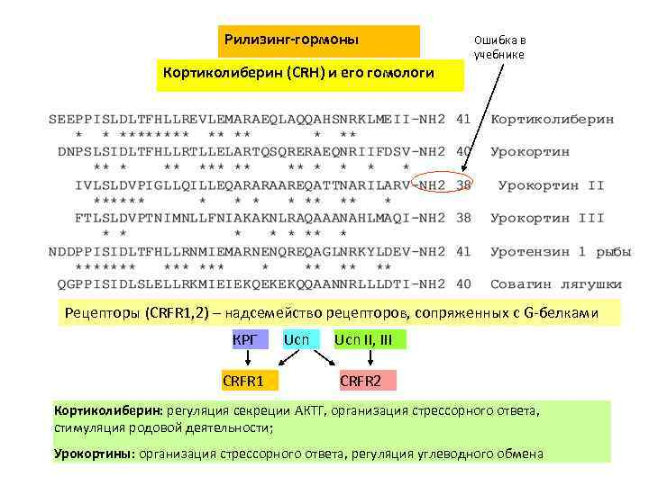 Рилизинг-гормоны Ошибка в учебнике Кортиколиберин (CRH) и его гомологи Рецепторы (CRFR 1, 2) –