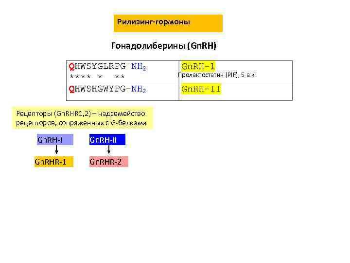 Рилизинг-гормоны Гонадолиберины (Gn. RH) Пролактостатин (PIF), 5 а. к. Рецепторы (Gn. RHR 1, 2)