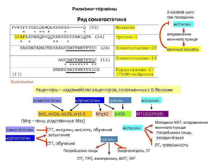Рилизинг-гормоны 2 -часовой цикл при голодании: Ряд соматостатина мотилин опорожнение желчного пузыря желчные кислоты