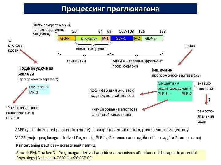 Процессинг проглюкагона GRPP= панкреатический пептид, родственный 1 30 глицентину GRPP ↓ глюкозы крови 64