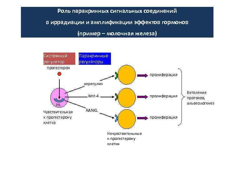 Роль паракринных сигнальных соединений в иррадиации и амплификации эффектов гормонов (пример – молочная железа)
