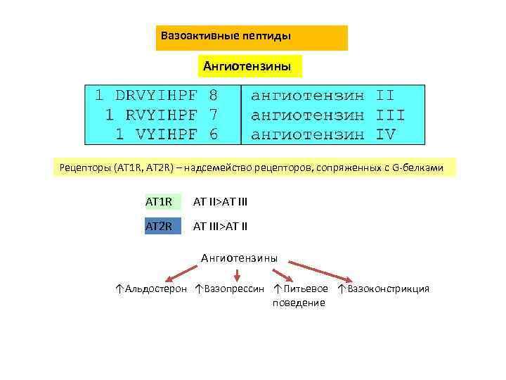 Вазоактивные пептиды Ангиотензины Рецепторы (AT 1 R, AT 2 R) – надсемейство рецепторов, сопряженных