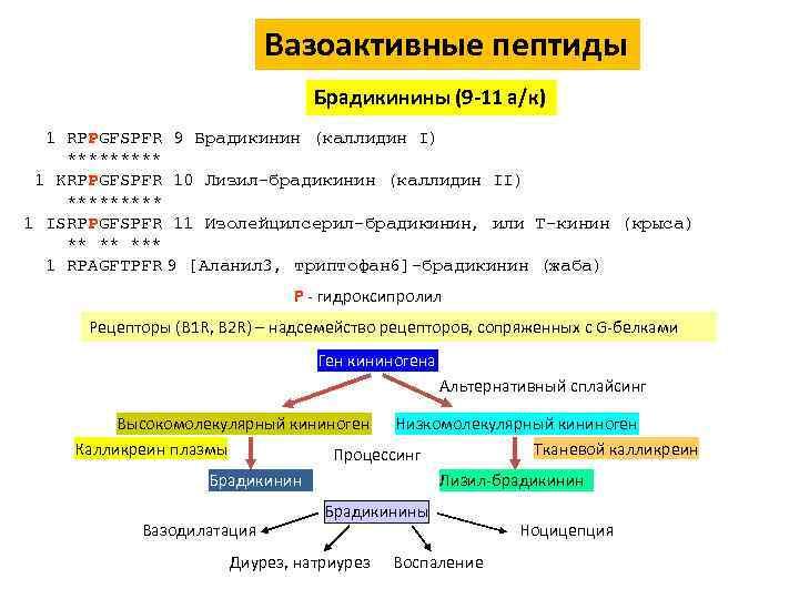 Вазоактивные пептиды Брадикинины (9 -11 а/к) 1 RPPGFSPFR 9 Брадикинин (каллидин I) ***** 1