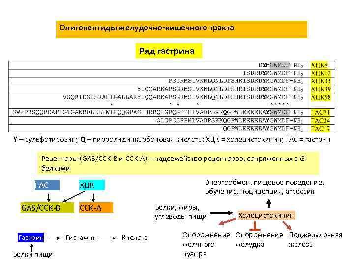 Олигопептиды желудочно-кишечного тракта Ряд гастрина Y – сульфотирозин; Q – пирролидинкарбоновая кислота; ХЦК =
