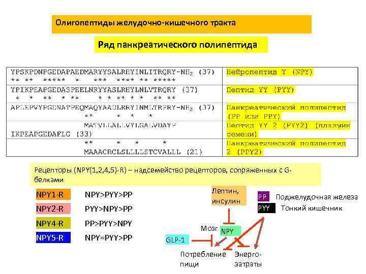Олигопептиды желудочно-кишечного тракта Ряд панкреатического полипептида Рецепторы (NPY(1, 2, 4, 5)-R) – надсемейство рецепторов,