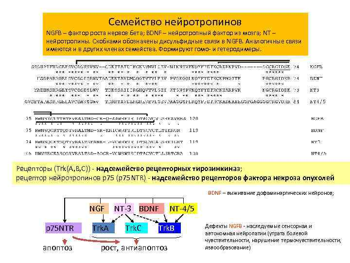 Семейство нейротропинов NGFB – фактор роста нервов бета; BDNF – нейротропный фактор из мозга;