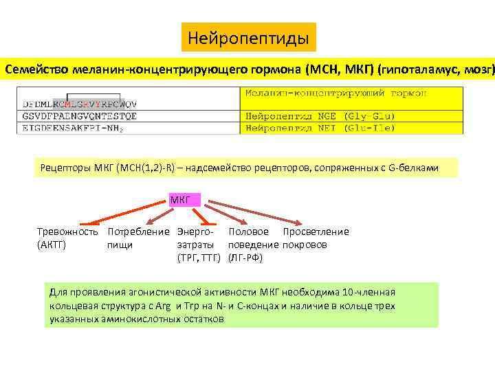 Нейропептиды Семейство меланин-концентрирующего гормона (MCH, МКГ) (гипоталамус, мозг) Рецепторы МКГ (MCH(1, 2)-R) – надсемейство