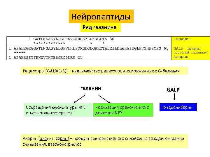 Нейропептиды Ряд галанина Рецепторы (GALR(1 -3)) – надсемейство рецепторов, сопряженных с G-белками галанин Сокращения