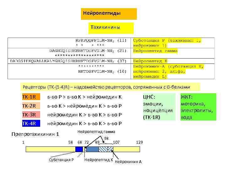 Нейропептиды Тахикинины Рецепторы (TK-(1 -4)R) – надсемейство рецепторов, сопряженных с G-белками TK-1 R в-во