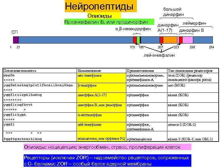 Нейропептиды большой динорфин Опиоиды Проэнкефалин B, или продинорфин α, β-неоэндорфин СП 1 21 175