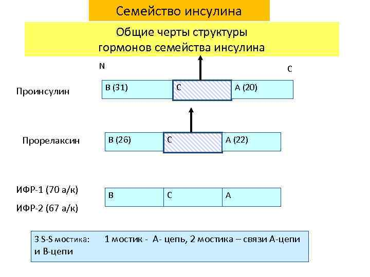 Семейство инсулина Общие черты структуры гормонов семейства инсулина N Проинсулин Прорелаксин ИФР-1 (70 а/к)