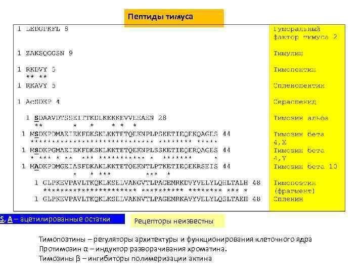 Пептиды тимуса S, A – ацетилированные остатки Рецепторы неизвестны Тимопоэтины – регуляторы архитектуры и