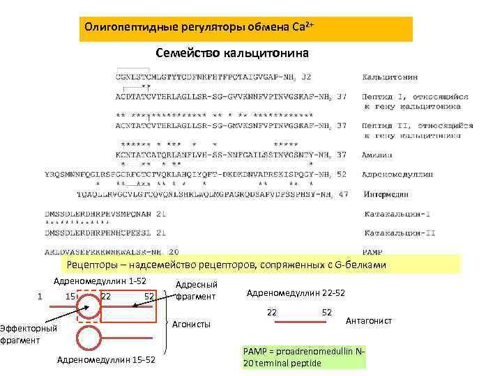 Олигопептидные регуляторы обмена Сa 2+ Семейство кальцитонина Рецепторы – надсемейство рецепторов, сопряженных с G-белками