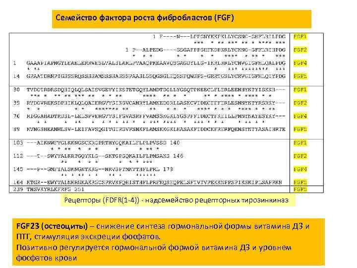 Семейство фактора роста фибробластов (FGF) Рецепторы (FDFR(1 -4)) - надсемейство рецепторных тирозинкиназ FGF 23
