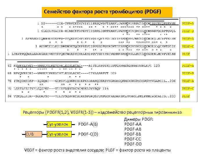 Семейство фактора роста тромбоцитов (PDGF) Рецепторы (PDGFR(1, 2), VEGFR(1 -3)) – надсемейство рецепторных тирозинкиназ