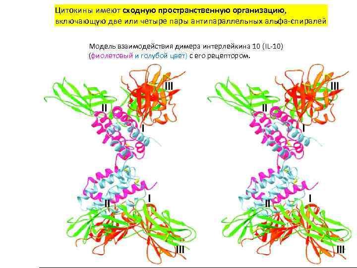 Цитокины имеют сходную пространственную организацию, включающую две или четыре пары антипараллельных альфа-спиралей Модель взаимодействия