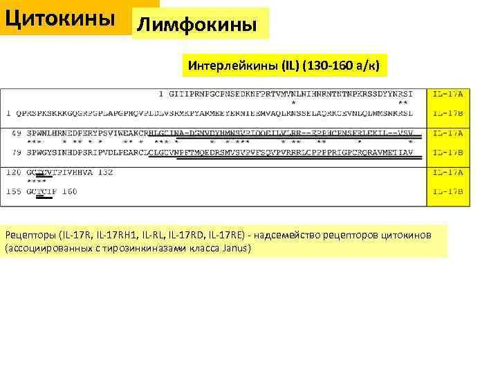 Цитокины Лимфокины Цитокины Интерлейкины (IL) (130 -160 а/к) Рецепторы (IL-17 R, IL-17 RH 1,