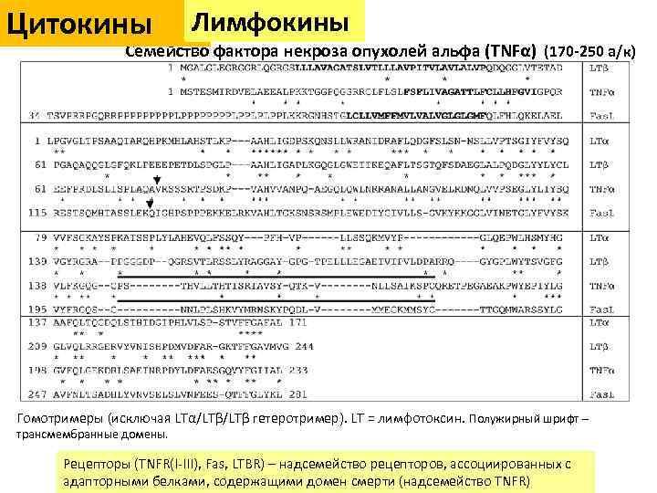 Цитокины Лимфокины Семейство фактора некроза опухолей альфа (TNFα) (170 -250 а/к) Гомотримеры (исключая LTα/LTβ