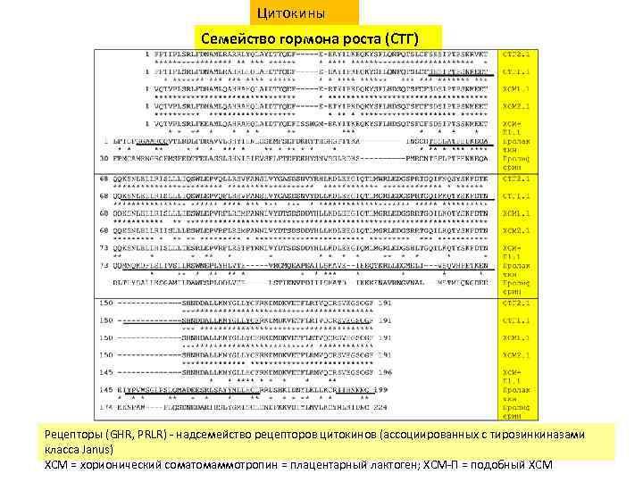 Цитокины Семейство гормона роста (СТГ) Рецепторы (GHR, PRLR) - надсемейство рецепторов цитокинов (ассоциированных с