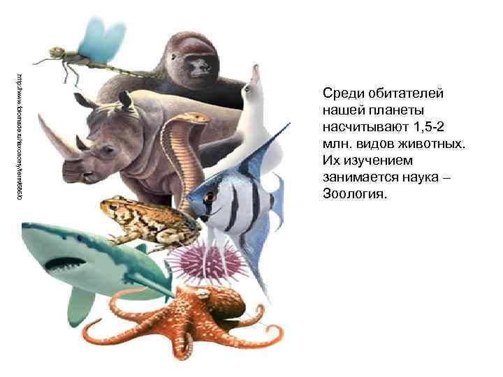 http: //www. folomade. ru/taxonomy/term/686/0 Среди обитателей нашей планеты насчитывают 1, 5 -2 млн. видов