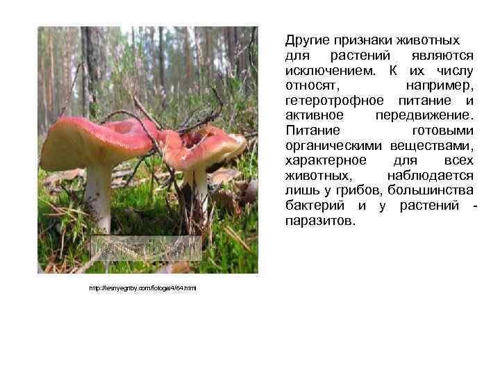Другие признаки животных для растений являются исключением. К их числу относят, например, гетеротрофное питание
