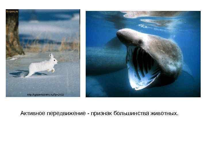 http: //igraemsdetmy. ru/? p=2102 Активное передвижение - признак большинства животных.