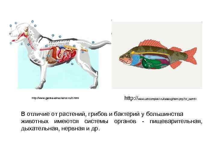 http: //www. galcka-alina. narod. ru/3. html http: //www. uchcomplekt. ru/catalog/item. php? id_cat=81 В отличие